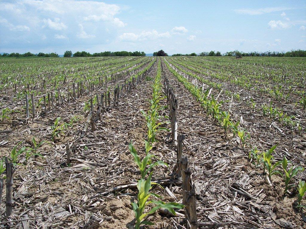 Dostatočný input organickej hmoty do pôdy je základom udržania pôdnej úrodnosti