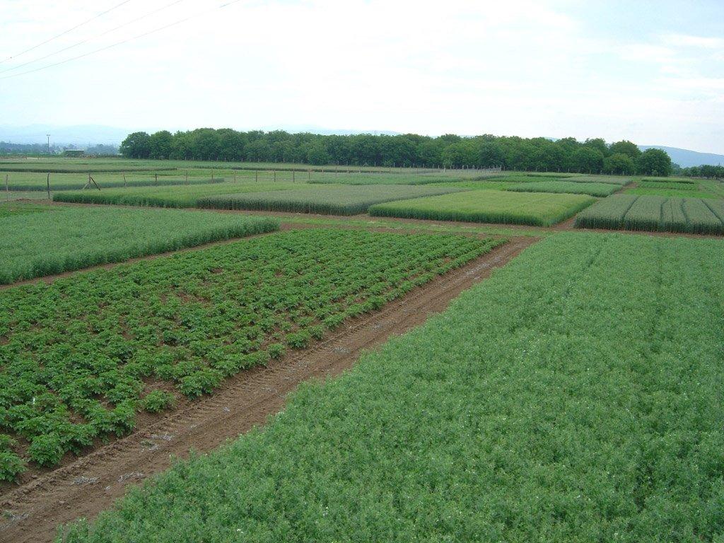 Stacionárny poľný pokus v Borovciach